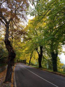 Viale Emanuele II