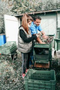 persone che eliminano foglie dalle olive